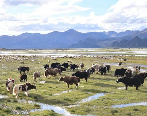 签约_西藏农投牧业发展有限公司品牌形象和包装策划设计